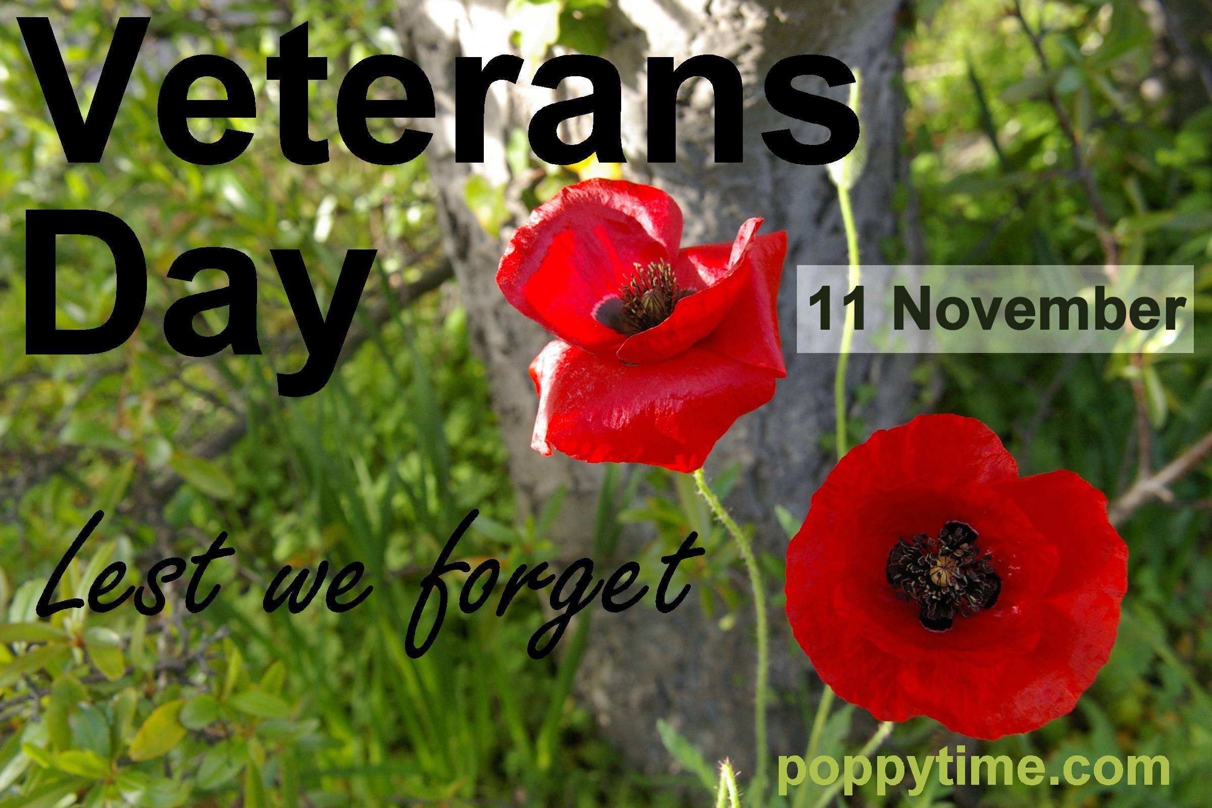Posters For Remembrance Day And Veterans Day